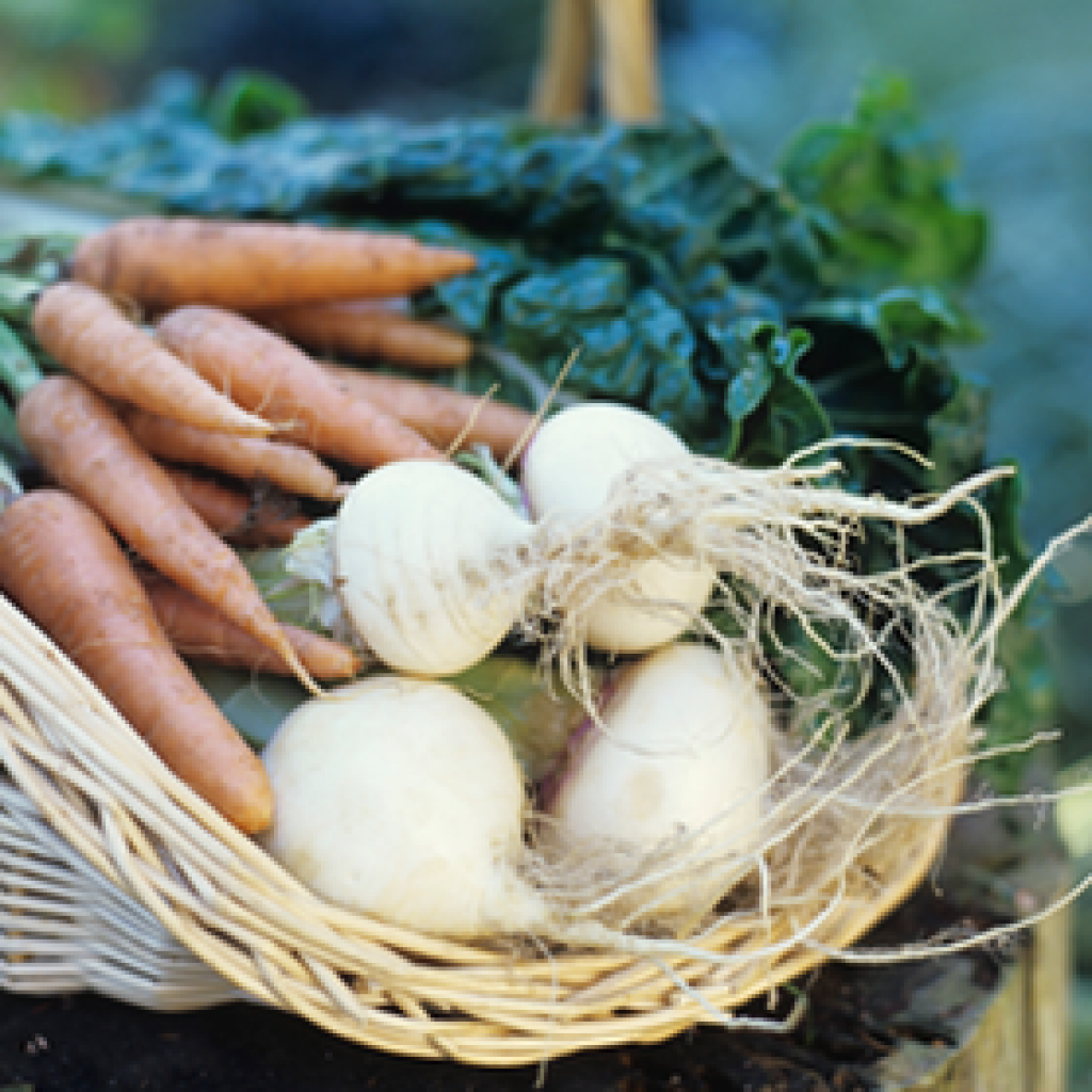 dorset farmers market